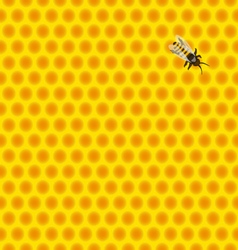 Honeycomb with bee vector