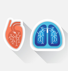 Human lungs and heart flat vector