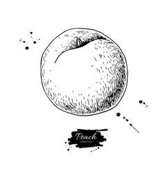 Peach drawing isolated hand drawn object vector