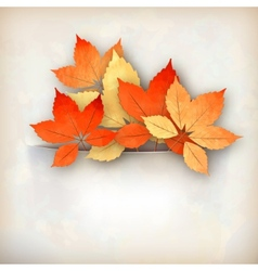 Autumn fall leaves vector