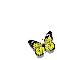 Butterfly on paper 09 vector image vector image
