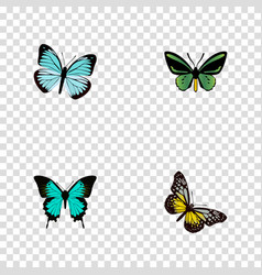 Realistic tropical moth copper lexias and other vector
