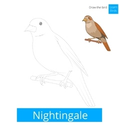 Nightingale bird learn to draw vector