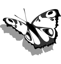 Butterfly on paper 13 vector
