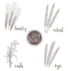 organic grain sketch hand drawing vector image vector image