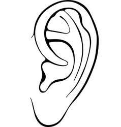 Human ear vector