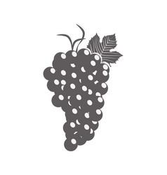 Grape fruit wine ingredient vector