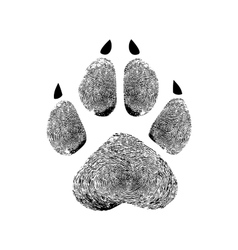 Paw prints human prints vector