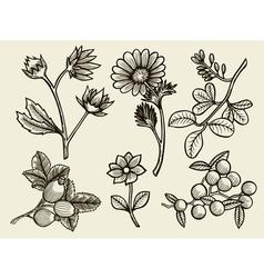 flowers leaves and berries vector image