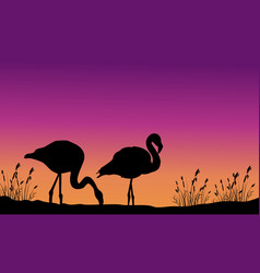 At sunset flamingo on hill scenery vector