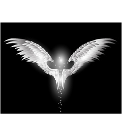 Angel wings on dark background vector