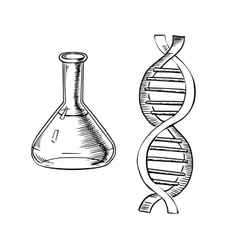 Laboratory flask and dna helix vector