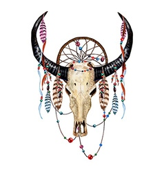 Bull Skull Feathers vector image vector image