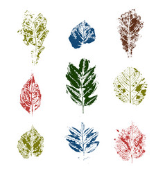 colored leaves stamps variants vector image vector image