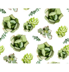 seamless pattern of green colorful succulent vector image vector image