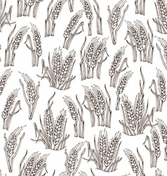 seamless sketch wheat pattern vector image