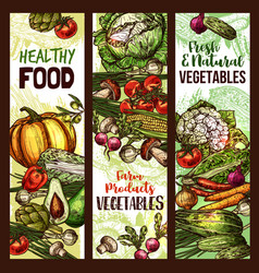 vegetables and veggie sketch banners vector image