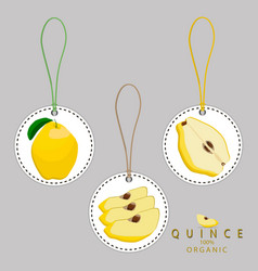 the quince vector image