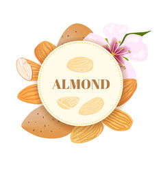 Almonds nuts in skins and peeled with flower vector