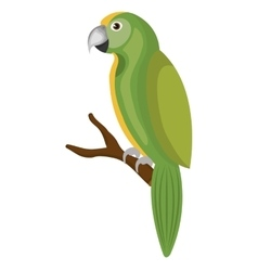 Cute parrot bird isolated icon vector
