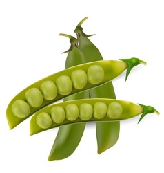 Peas vegetable with seed vector vector