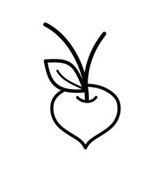 Line beet organic healthy vegetable vector
