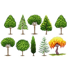 Set of different types of trees vector image vector image