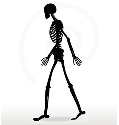 Skeleton silhouette in walk vector