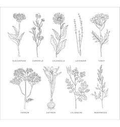 Medical herbs set hannddrawn style vector