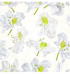 seamless texture rhododendron white flower vector image