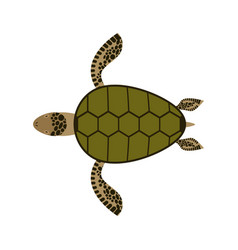 Sea turtle isolated water reptile on white vector