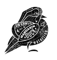 Bird mandarin duck vector