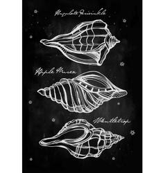 Hand drawn set of seashells vector