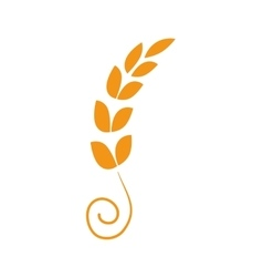 Wheat plant Agriculture design graphic vector image