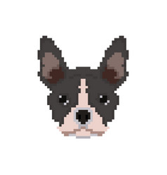 french bulldog head in pixel art style vector image