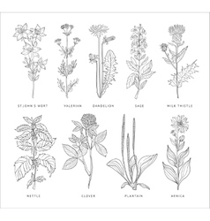 Medical Herbs Set Hannddrawn Style vector image