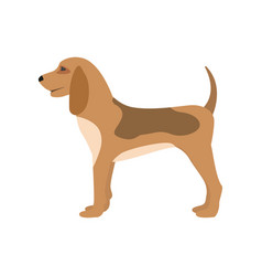 A cartoon hunting dog puppy vector