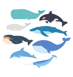 Whales and dolphin set marine mammals vector