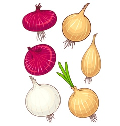 Set of different onion vector
