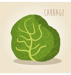 Fresh cabbage vegetarian food vector