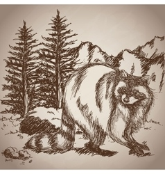 Hand drawing raccoon landscape vintage vector