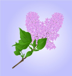 Lilac twig with flowers and leaves vector