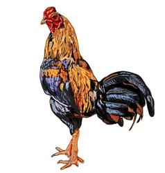 Thai cock vector