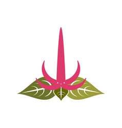 Amaranth-flower-380x400 vector
