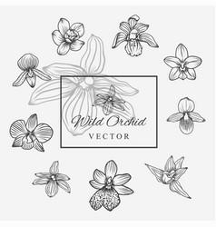 Wild orchid set vector
