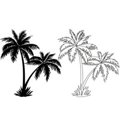 Palm Trees Silhouettes and Contours vector image vector image