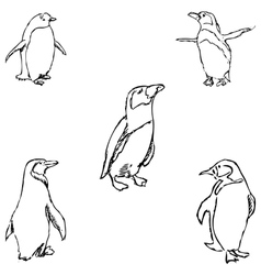 Penguins A sketch by hand Pencil drawing vector image