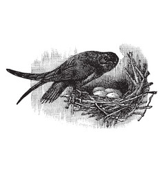 Spine tailed chimney swift vintage vector