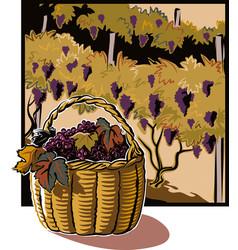 Wicker basket full of ripe grapes vector
