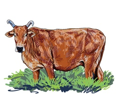 Curious cow vector image